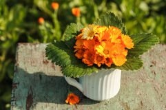Calendula kwiaty Obrazy Stock
