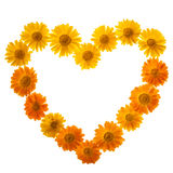 Calendula In Love Shape Stock Images