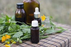 Calendula médical Photo stock