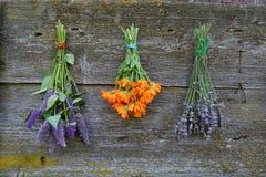 Calendula marigold, lavender and Anise hyssop royalty free stock photo
