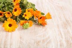 Calendula Officinalis Fiore del tagete con la foglia su fondo di legno bianco con lo spazio della copia per il vostro testo fotografia stock libera da diritti