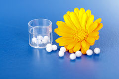 Calendula Officinalis and homeopathic pills Royalty Free Stock Image