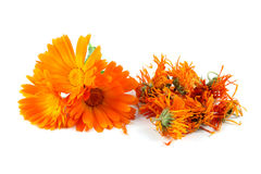 Calendula officinalis kwiaty, nagietek, suszący Obraz Royalty Free