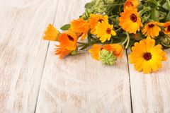 Calendula officinalis. Marigold flower with leaf on white wooden background with copy space for your text.  stock image