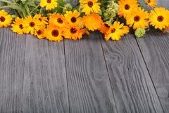 Calendula Officinalis Ringelblumenblume mit Blatt auf schwarzem hölzernem Hintergrund mit Kopienraum für Ihren Text lizenzfreie stockfotografie