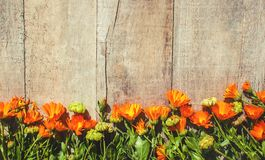 Calendula officinalis on wooden background. Selective focus Royalty Free Stock Photography