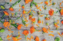 Calendula officinalis on wooden background. Selective focus Stock Images