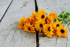 Calendula officinalis on the wooden background. Many flovers Calendula officinalis on the old rustic wooden background Stock Photo