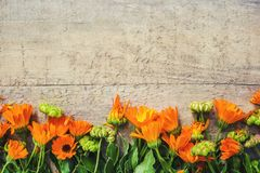 Calendula officinalis on wooden background. Selective focus Royalty Free Stock Photos