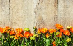 Calendula officinalis on wooden background. Selective focus Stock Photo