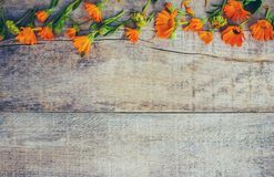 Calendula officinalis on wooden background. Selective focus Royalty Free Stock Photo