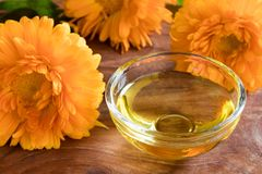 Calendula oil in a glass bowl with calendula flowers in the back. Calendula oil in a glass bowl with fresh calendula flowers in the background Stock Photos