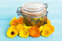 Calendula Oil in a Jar with Calendula Flowers Royalty Free Stock Image