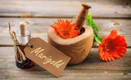 Calendula essential oil and fresh blooming twig in a mortar, wooden table, tag with text marigold. Calendula or pot marigold essential oil and fresh blooming Royalty Free Stock Images