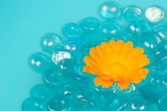 Calendula (Pot Marigold) Flower Floating on Water Royalty Free Stock Images