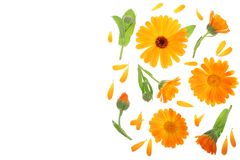 Calendula Ringelblumenblume lokalisiert auf weißem Hintergrund mit Kopienraum für Ihren Text Beschneidungspfad eingeschlossen Fla Stockfotos