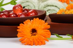 Calendula spa set Stock Images
