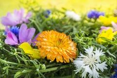 Calendula in summer wreath Stock Image