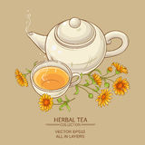 Calendula tea  vector illustration. Cup of calendula tea  and teapot vector background Stock Images