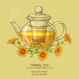 Calendula tea  vector illustration. Vector illustration with calendula tea in glass teapot Stock Photography