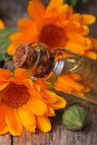 Calendula tincture in glass bottle macro vertical Stock Photo