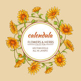 Calendula vector frame. Calendula flowers vector frame on color background Royalty Free Stock Images