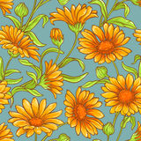 Calendula vector seamless pattern. Calendula flowers vector color seamless pattern on color background Stock Photos