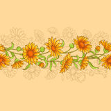 Calendula vector seamless pattern Royalty Free Stock Photos