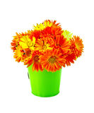 Calendula yellow and orange bouquet in a bucket Stock Images