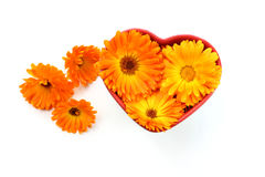 Calendulablume, Ringelblume im Herzen Lizenzfreie Stockbilder