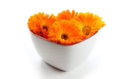 Calendulablume, Ringelblume im Herzen Stockbilder