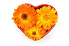 Calendulablume, Ringelblume im Herzen Stockbild