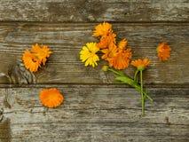 Calendulaen blommar på den gamla träbakgrunden royaltyfri fotografi