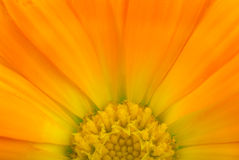 Calendular sun Royalty Free Stock Photography