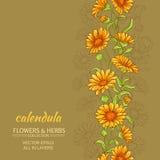 Calendulavektorbakgrund Royaltyfria Bilder