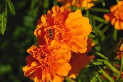 Calentado por el sol del otoño Foto de archivo