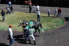 Calentamiento de la carrera de caballos Fotos de archivo libres de regalías