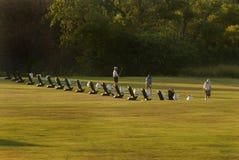 Calentamiento de los golfistas Imágenes de archivo libres de regalías