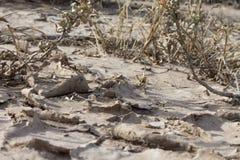 Calentamiento del planeta agrietado de la tierra Imagen de archivo
