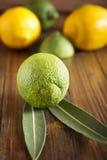 Cales y limones Foto de archivo libre de regalías
