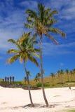 Caleta Anakena, Easter Island, Chile. Moai and palm trees at Caleta Anakena on Easter Island Stock Photography