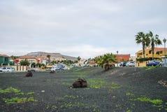 Caleta de Fustes - Fuerteventura, kanariefågelö, Spanien Royaltyfri Fotografi