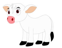 Calf. Little cow isolated on white background and clip art Royalty Free Stock Photos