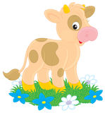 Calf. Little calf on green grass with flowers Royalty Free Stock Photography