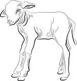 Calf. Brush stroke line art cute calf image Stock Photography