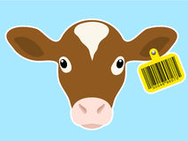 Calf head with bar code earmark Royalty Free Stock Photos