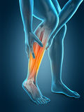 Calf pain Stock Image