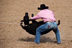Calf roper Stock Photos