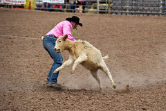 Calf roper. APACHE JUNCTION, AZ - FEBRUARY 26: A cowboy participates in the calf roping competition at the Lost Dutchman Days Rodeo on February 26, 2010 in royalty free stock photos