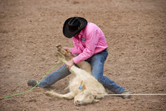 Calf roper. APACHE JUNCTION, AZ - FEBRUARY 26: A cowboy participates in the calf roping competition at the Lost Dutchman Days Rodeo on February 26, 2010 in Stock Photos